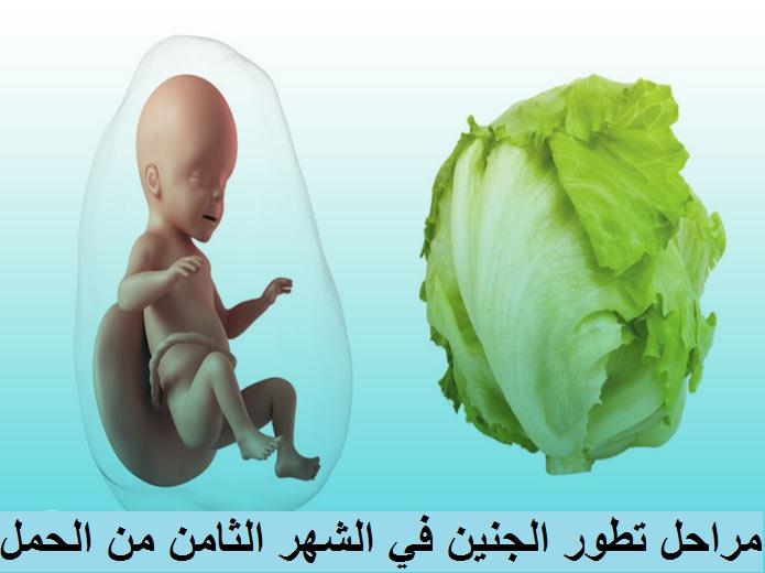 مراحل تطور الجنين في الشهر الثامن من الحمل