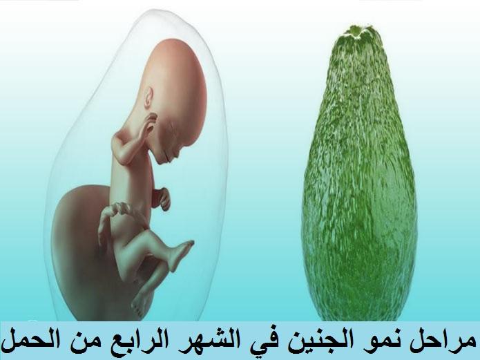 مراحل تطور الجنين في الشهر الرابع من الحمل