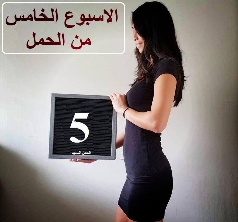الاسبوع الخامس من الحمل