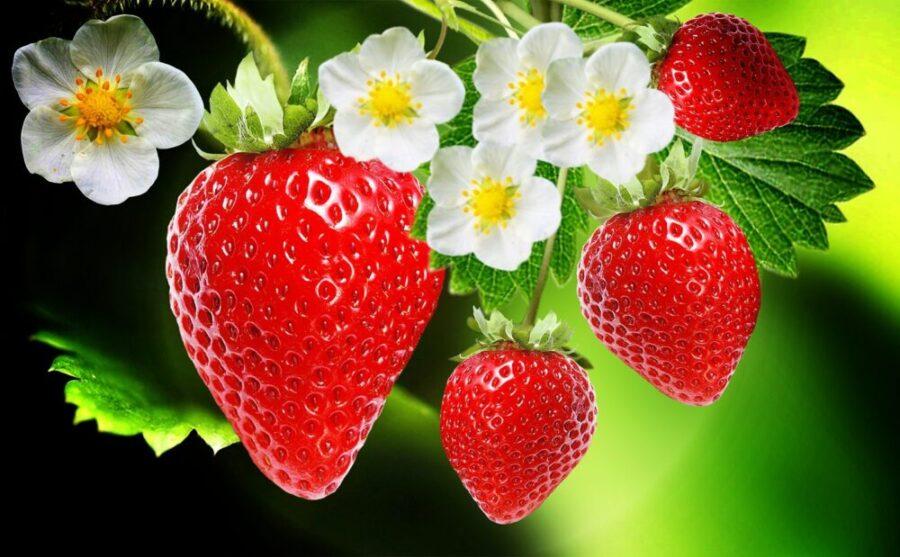 فوائد الفراولة - القيمة الغذائية للفراولة