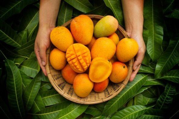 فوائد المانجو - القيمة الغذائية للمانجو