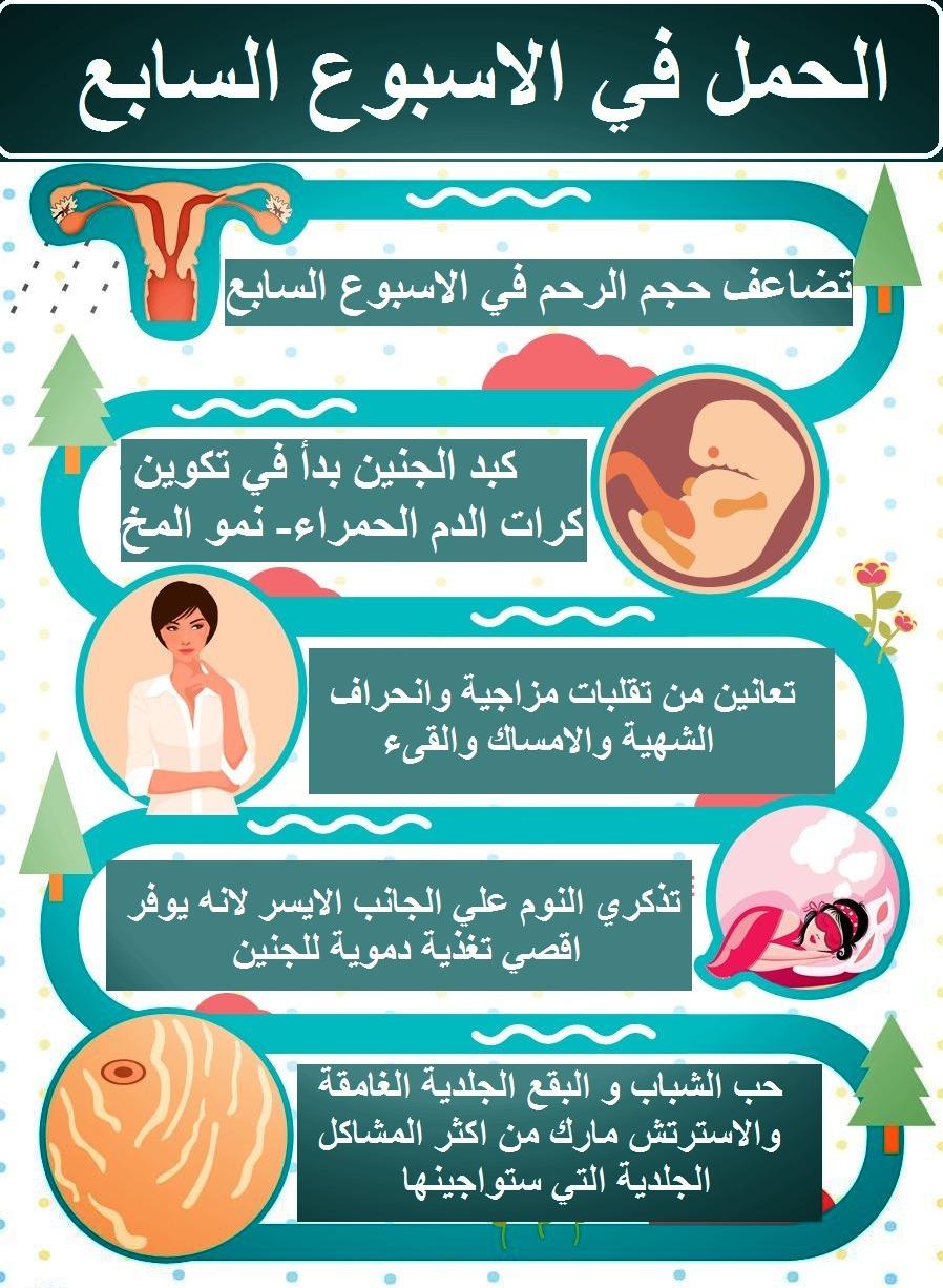 اعراض الحمل في الاسبوع السابع