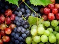 القيمة الغذائية للعنب وسعرات العنب و12 من فوائد العنب