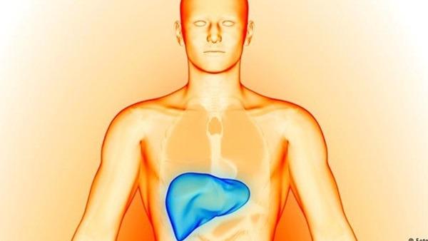10 أطعمة تقوي الكبد وتخلص الجسم من السموم
